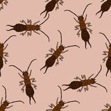 Seamless pattern with  Earwig .Forficula auricularia. hand-drawn Earwig .  Stock Image