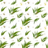 Seamless pattern with eucalyptus leaves, seeds and. Seamless pattern with eucalyptus pods, flowers and leaves. Elegant background for website, packaging, digital Stock Image