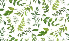 Seamless pattern of Eucalyptus palm fern different tree, foliage Royalty Free Stock Images