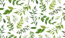Seamless pattern of Eucalyptus palm fern different tree, foliage. Natural branches, green leaves, herbs, tropical plant hand drawn watercolor Vector fresh royalty free illustration
