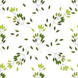 Seamless pattern of Eucalyptus palm fern different tree, foliage natural branches, green leaves, herbs, tropical plant hand drawn vector illustration