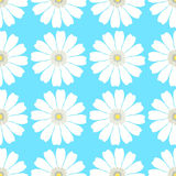 Seamless pattern evenly with a camomile on a blue background. ve Stock Images