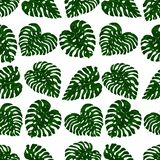 Seamless pattern of exotic, bright green monstera leaves, randomly scattered and isolated on a transparent background vector illustration