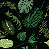 Seamless pattern with exotic leaves on black background. Royalty Free Stock Images