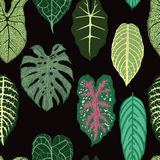 Seamless pattern with exotic leaves on black backround. Royalty Free Stock Photography