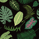 Seamless pattern with exotic leaves on black backround. Stock Photos