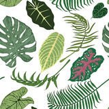 Seamless pattern with exotic leaves on white background. Stock Image