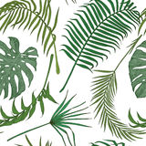 Seamless pattern with exotic leaves on white backround. Royalty Free Stock Photo