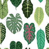 Seamless pattern with exotic leaves on white backround. Stock Photo