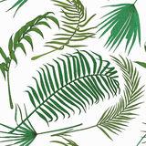 Seamless pattern with exotic leaves on white backround. Stock Photos