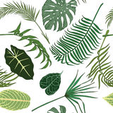 Seamless pattern with exotic leaves on white backround. Royalty Free Stock Image