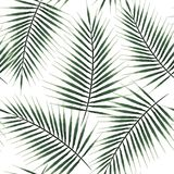 Seamless pattern of exotic palm trees. Green leaves on white background. Tropical leaf. Seamless pattern of exotic palm trees. Green leaves on white background Stock Images