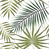 Seamless pattern of exotic palm trees. Green tropical leaves on white background. Seamless pattern of exotic palm trees. Green leaves on white background Royalty Free Stock Photo