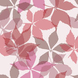 Seamless pattern with falling leaves. Background with autumn virginia creeper leaves. Stock Photo