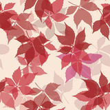 Seamless pattern with falling leaves. Background with autumn virginia creeper leaves. Royalty Free Stock Image