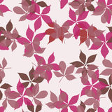 Seamless pattern with falling leaves. Background with autumn virginia creeper leaves. Royalty Free Stock Images
