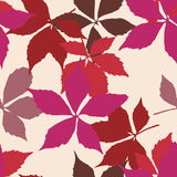 Seamless pattern with falling leaves. Background with autumn virginia creeper leaves. Royalty Free Stock Photo