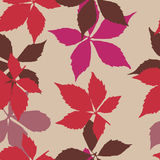 Seamless pattern with falling leaves. Background with autumn virginia creeper leaves. Stock Photography