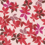 Seamless pattern with falling leaves. Background with autumn virginia creeper leaves. Stock Images