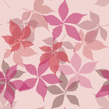 Seamless pattern with falling leaves. Background with autumn virginia creeper leaves. Royalty Free Stock Photography