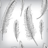 Seamless Pattern Feather Hand Drawn Background Stock Photography