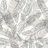 Seamless pattern with feathers. Hand-drawn monochrome  bac Stock Photography