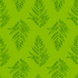 Seamless pattern with fern Royalty Free Stock Images