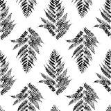 Seamless pattern with fern. Leaves Stock Photo