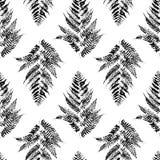 Seamless pattern with fern Stock Photo
