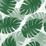 Seamless pattern of fern leaves. Seamless pattern of green fern leaves on a white background Royalty Free Stock Photos