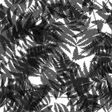 Seamless pattern of fern leaves. illustration Stock Photo