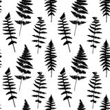 Seamless pattern with fern leaves silhouettes Stock Images