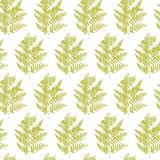 Seamless pattern with fern leaves vector. Illustration Royalty Free Stock Image