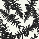 Seamless pattern of fern leaves. Vector. Illustration of jungle nature design. Black and white colors Stock Photos