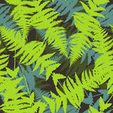 Seamless pattern of fern leaves. Vector. Illustration of jungle nature design. Green and black colors Royalty Free Stock Image