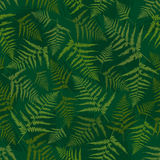Seamless pattern of fern. Vector Royalty Free Stock Image