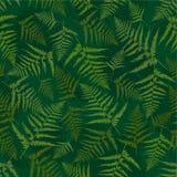 Seamless pattern of fern. Royalty Free Stock Image