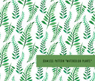 Seamless pattern with fern Stock Images
