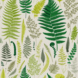 Seamless pattern. Ferns. Vintage vector botanical illustration Royalty Free Stock Image