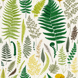 Seamless pattern. Ferns. Vintage vector botanical illustration. Colorful Royalty Free Stock Photo