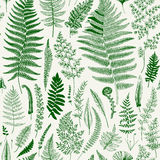 Seamless pattern. Ferns. Vintage vector botanical illustration. Green Stock Photography
