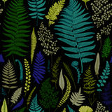 Seamless pattern. Ferns. Vintage vector botanical illustration. Vivid Stock Images