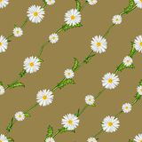 Seamless pattern from field chamomiles on stems diagonally. Flowers, stems and background are separated Stock Photo