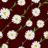 Seamless pattern from field chamomiles on stems diagonally. On claret background Royalty Free Stock Photo