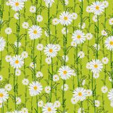 Seamless pattern from field chamomiles in the style of Provence. Summer Royalty Free Stock Image