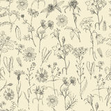 Seamless pattern with field flowers and herbs. Vector illustration for your design Royalty Free Stock Image