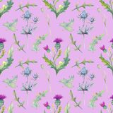 Seamless pattern. Field flowers. The image of summer. Watercolor illustration. Design element royalty free stock photos