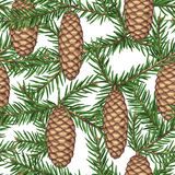 Seamless pattern with fir branches and cones. Detailed vintage illustration Stock Photo