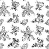 Seamless pattern with fir cones. Seamless pattern with hand drawn fir cones Stock Images