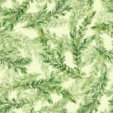 Seamless pattern with fir tree branches. Green watercolor seamless pattern with fir tree branches Stock Photo